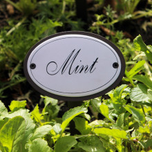 Mint Herb Sign